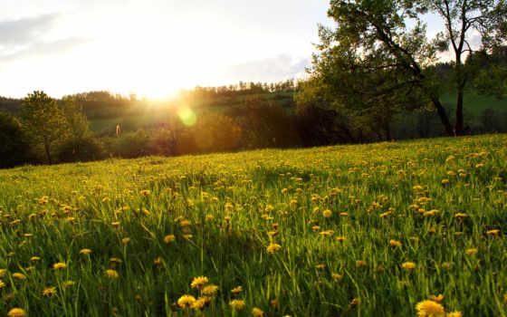 деревья, цветы, трава