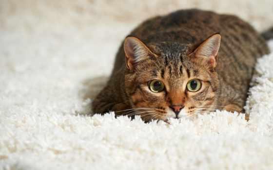 кот, ковре, mochi, clean, ковра, запах, ковёр, кота, кошачьей, youtube,