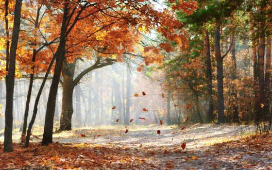 фотообои, осень, time, пасть, унылая, уже, очень, поскольку,
