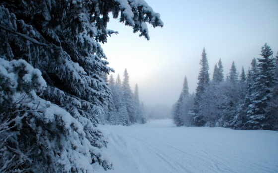 снег, winter, об, туман, фоны, зиму, trees, категории, нояб,