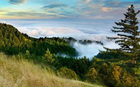 marin, уезд, california, tamalpais, san, mt, патрик, туман,