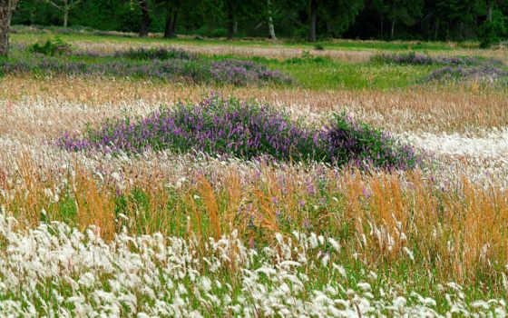 cvety, полевые, трава, зелёный, травы, июль, кормовые, породы, древесные, лиственные, злаки,
