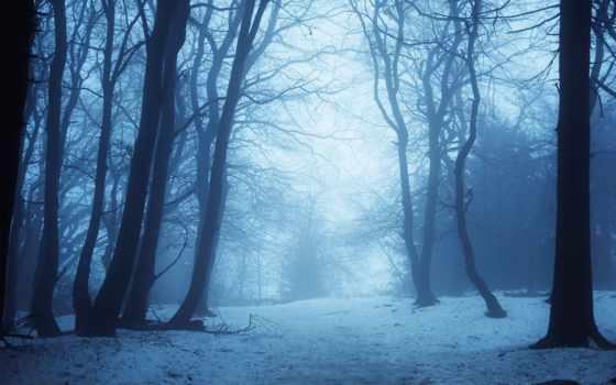 музыка, itunes, winter, фоны, лес, снег, id, avatan, фотоальбом, bandcamp,