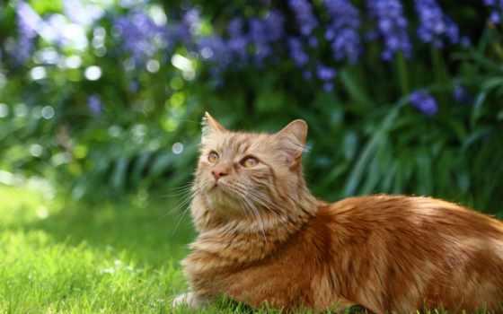 рыжие, яndex, коллекциях, посмотрите, кошки, коллекцию, коты,