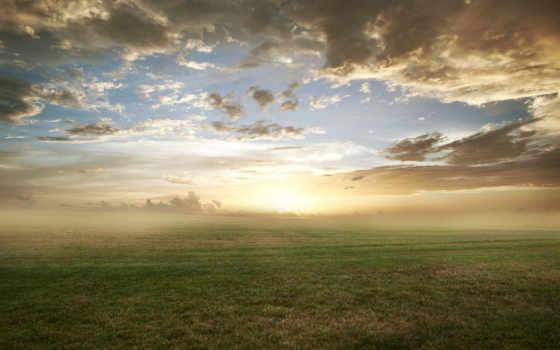 трава, утро, туман