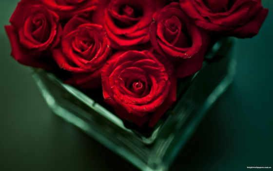 розы, cvety, красные Фон № 78694 разрешение 1920x1200