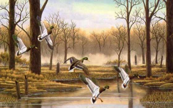 ducks, birds, desktop, amazing, утка, free, природа,
