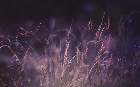 фиолетовый, color, растения