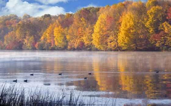 осень, природа, time