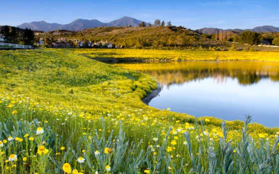 природа, summer, цветы Фон № 135739 разрешение 1920x1200