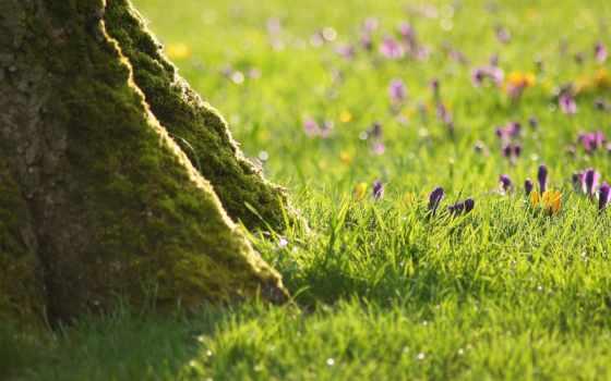 дерево, трава, cvety, ствол, кора, зелёный, trees, небо, ложбинка, природа,