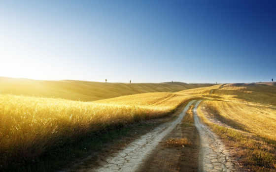 дорога, пшеница, природа, небо, summer, sun, трава, поле