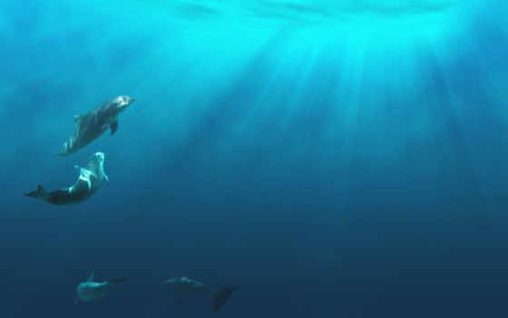 дельфины, играют