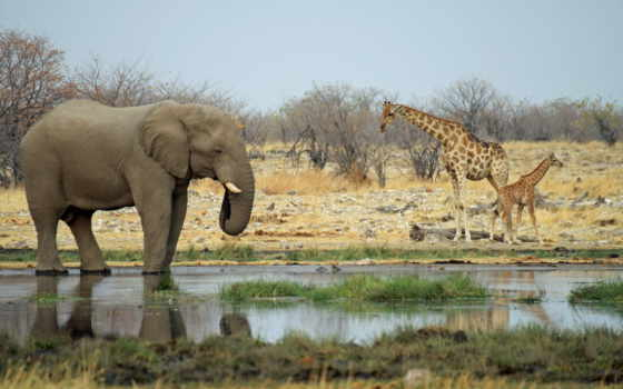 животные, африки, африка