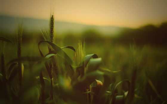 поле, природа, summer