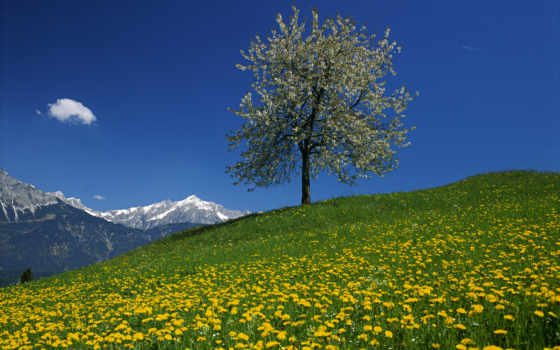 гора, landscape, дерево, австрия, mysteries, mountains, поле, funny, фото,