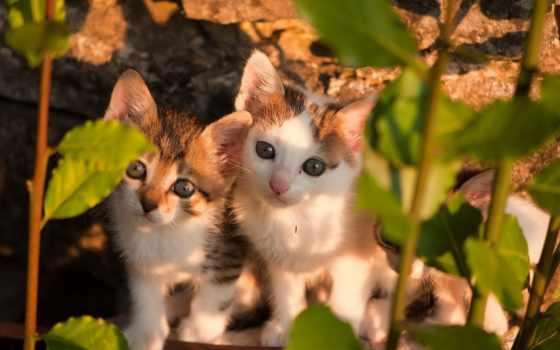 котята, милые, кошки, pair, разное, полосатые, листва, природа, песочница, количество,