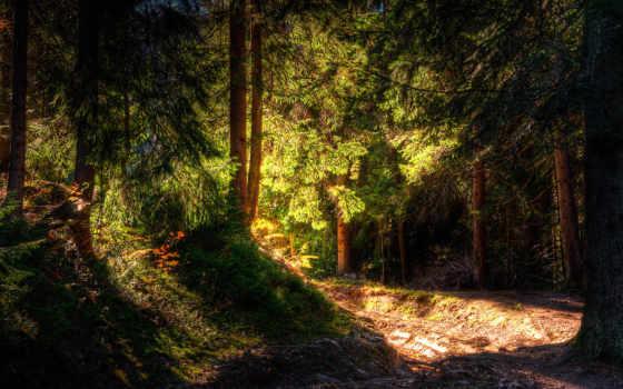 лес, широкоформатные