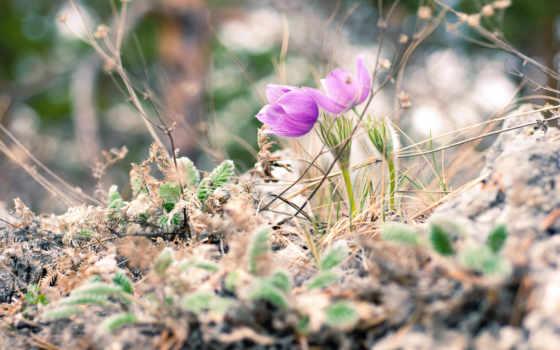 Цветы 37409