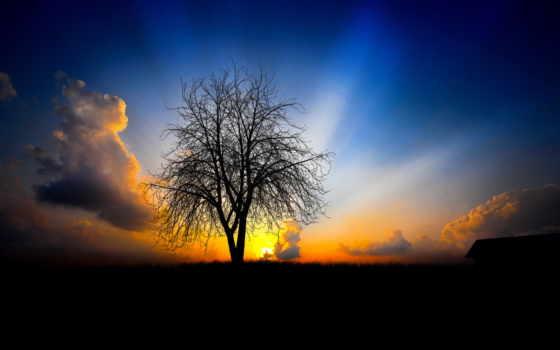 дерево, поле, они