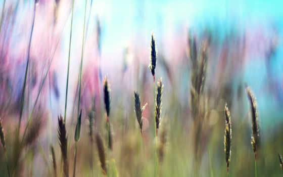 свежесть, трава, summer, поле, зелёный, rays, свет, sun, травка, травичка,