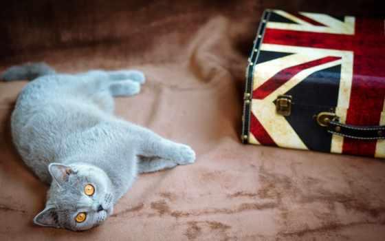 кот, британец, серый, чемодан, свет, желтые, ук, флаг, лежит,