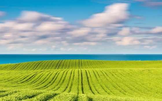baltic, море, поле, природа, весна, балтийское,