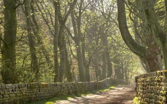 дорога, забор, страница, trees, поле, possible, рисунки, фотографий,
