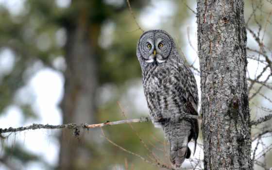 сова, природа, owls