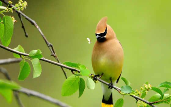 птицы, птица, ветке