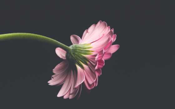 fundal, app, florus, цветы, google, planner, today, great, need