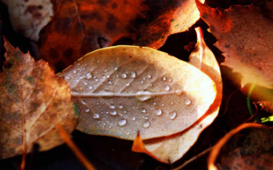 autumn, moisture