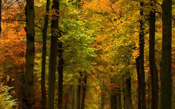 природа, леса