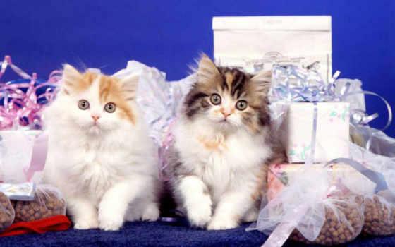 кошки, cats