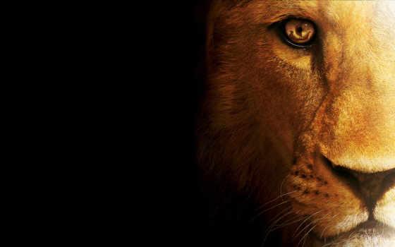 lion, кот, зверь