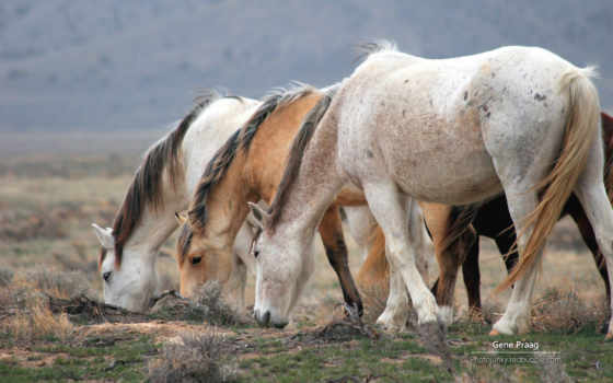 zhivotnye, лошади, домашние