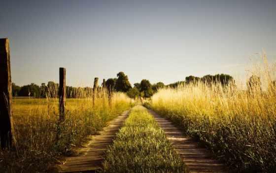 поле, дорога, summer