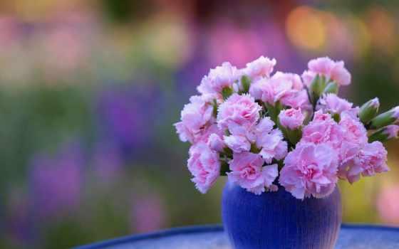 цветы, ваза, flowers, carnation, cvety, картинка, розовый,