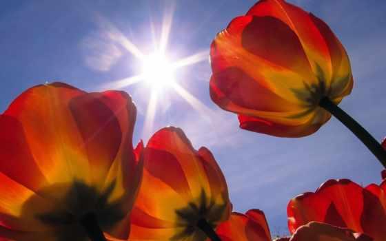 фотографий, красивые, cvety, sun, fotos, страница, flowers,