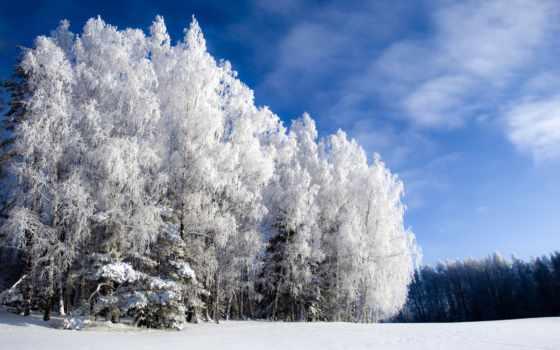 природа, winter, снег, года, trees,