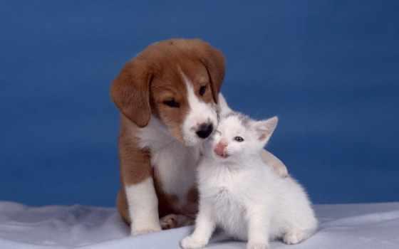 pinterest, pin, cute, kittens, own, foca, ulya, animales, lindos,