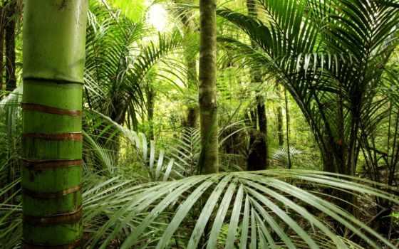 коллекция, jungle, walldeco, user, наклейка, смотреть, центральный, mural, лес