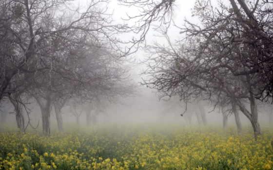 природа, рапс, деревья
