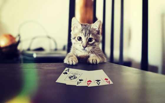 карты, покер, игральные, kot, игры,