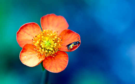 hành, nın, hoa