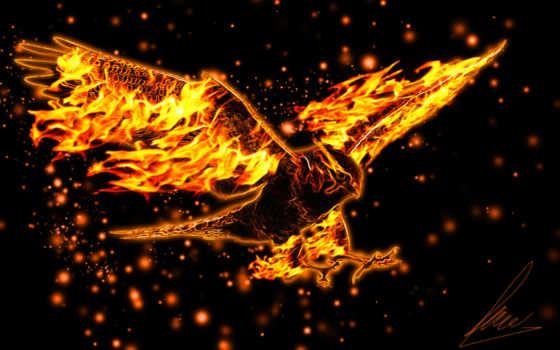 орлан, burning, крылья, полет, красивые, графики, страница,