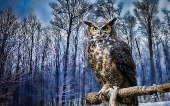winter, сова, птица, zhivotnye, eastern, филин, скрежет, виргинский,