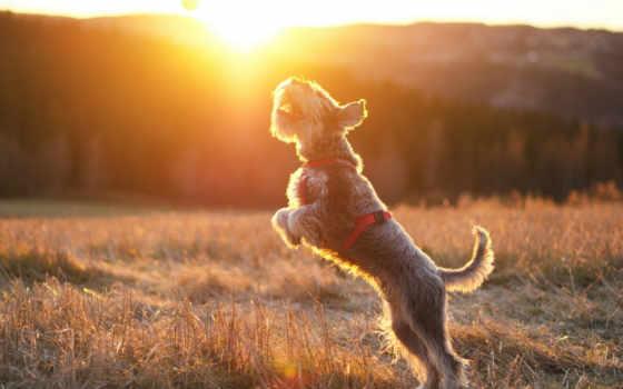 собака, мяч, погода, ukraine, днем, preview,