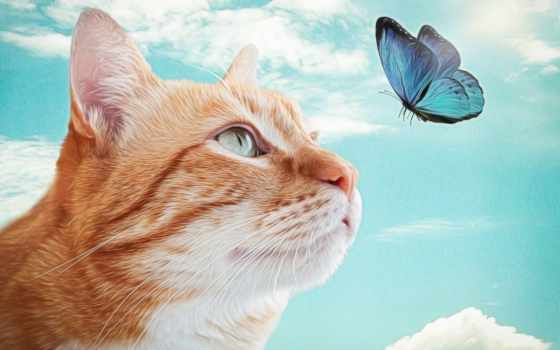 кот, added, blue, short, tanyya, коллекциях, яndex, посмотрите, творчества, white, фоны,