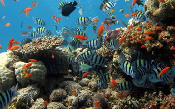 underwater, world, singapore, океанариум, fish, море, coral, animal, singapurskii, ocean